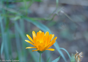 Recent Blogposts. Yellow Flower Anxiety